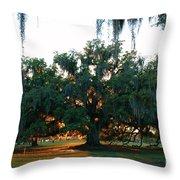 Live Oak Bathed In Evening Light Throw Pillow