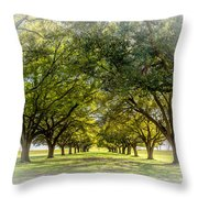 Live Oak Journey Vignette Throw Pillow