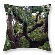 Live Oak Tree Throw Pillow