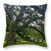 Live Oak Trees Throw Pillow