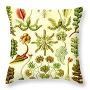 Liverworts Moss Brunnenlebermoos Haeckel Hepaticae Throw Pillow