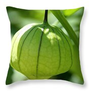 Living Lantern Throw Pillow
