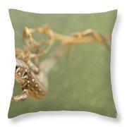 Lizard On The Branch Throw Pillow