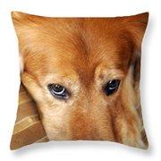 Lizzy Golden Retriever Throw Pillow