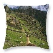 Llama At Machu Picchu Throw Pillow
