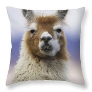Llama In Bolivia Throw Pillow