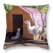 Llama Just Chilling Throw Pillow