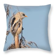 ln06 Bearded Reedling Juvenile Throw Pillow