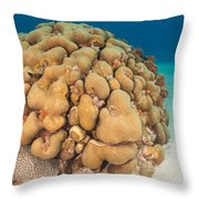 Lobed Star Coral Throw Pillow