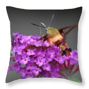 Lobster Bug Throw Pillow