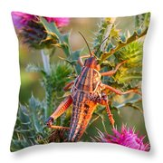 Locust And Thistle 2am-110423 Throw Pillow