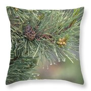 Lodge Pole Pine In The Fog Throw Pillow