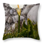 Lone Calla Lily Throw Pillow
