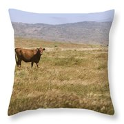 Lone Cow In Grassy Field Throw Pillow