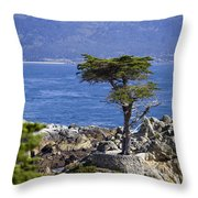 Lone Cypress Tree Throw Pillow