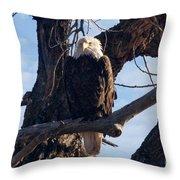 Lone Eagle Throw Pillow