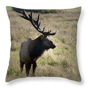 Lone Elk Throw Pillow