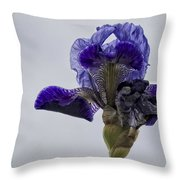 Lone Iris  Throw Pillow
