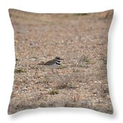 Lone Killdeer Throw Pillow