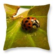 Lone Lady Bird Beetle Throw Pillow