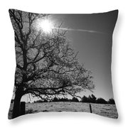Lone Live Oak Bw Throw Pillow