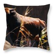 Lonesome Bull Throw Pillow