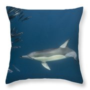 Long-beaked Common Dolphin Hunting Throw Pillow