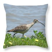 Long Billed Curlew At Palacios Bay Tx Throw Pillow