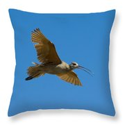 Long-billed Curlew In Flight Throw Pillow