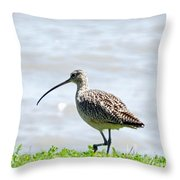 Long Billed Curlew  Throw Pillow
