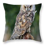 Long-eared Owl 4 Throw Pillow