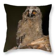 Long-eared Owl Asio Otus Throw Pillow