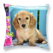 Long Eared Puppy In Front Of Blue Box Throw Pillow