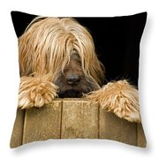 Long-haired Dog Throw Pillow