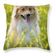 Long Haired Mixed Breed Throw Pillow