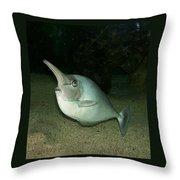 Long Nose Fish Throw Pillow
