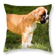 long tailed Boxer Puppy in the sun Throw Pillow