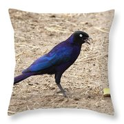 Long Tailed Glossy Starling  Throw Pillow