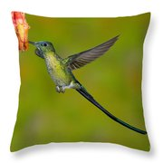 Long-tailed Sylph Throw Pillow