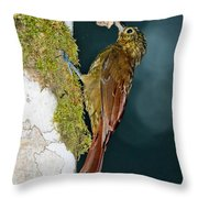 Long-tailed Woodcreeper Throw Pillow
