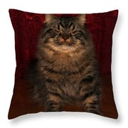 Longhair Scottish Fold Throw Pillow