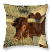 Longhorn # 2 Throw Pillow
