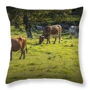 Longhorn Steer Herd In A Pasture Throw Pillow