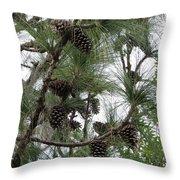 Longleaf Pine Cones Throw Pillow