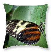 Longwing Butterfly Throw Pillow
