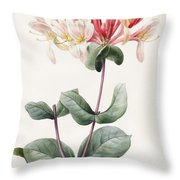 Lonicera Periclymenum  Throw Pillow by Louise D Orleans