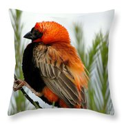 Lonley Bird Throw Pillow