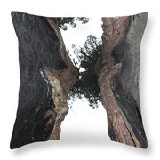 Look Up Between The Trees Throw Pillow