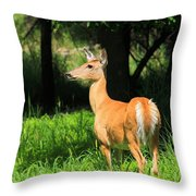 Looking At The Fawnns Throw Pillow