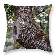 Looking At The Gorge Throw Pillow